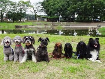 8月4日   清瀬金山緑地公園_170804_0001.jpg