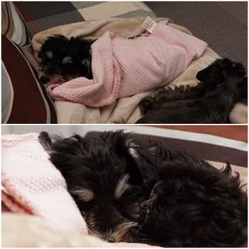 AMIピンクの毛布.jpg