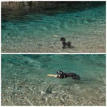 AMI初泳ぎ.jpg
