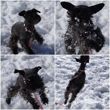 RUE雪遊び.jpg