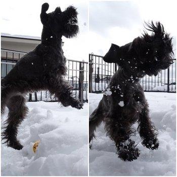RUE雪遊び1.jpg